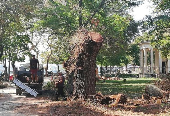 «Ξεκαθάρισμα» από την Υπηρεσία Πρασίνου στην Πλατεία